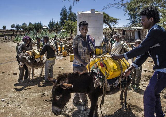 agua-Etiopia-burros-emergencia-sequia_EDIIMA20160321_0526_5